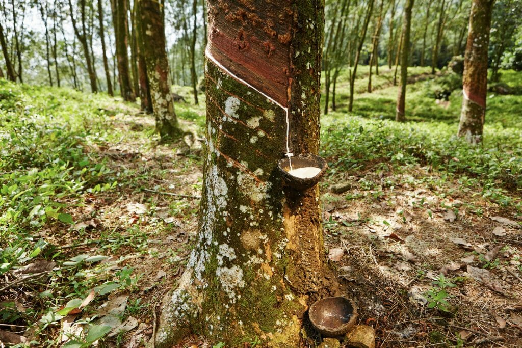 natural latex made from the milk of the rubber tree
